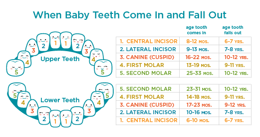 How Much Does A Baby Tooth Fetch From The Fairy At Your House